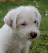 Emil, 8 Wochen alt