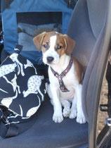 Debby, November 2011, reisefertig