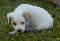 Enzo, 6 Wochen alt