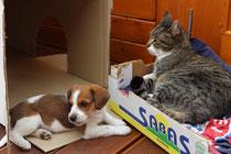 Espresso und unsere Katze Fritzi, ein gutes Team, 8 Wochen alt