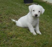 Emil, 6 Wochen alt