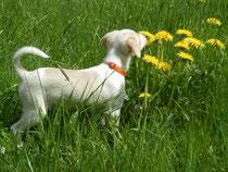 Der Frühling ist wunderbar, findet Elli