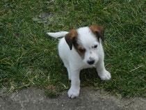 Eddi, 6 Wochen alt