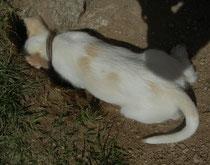 Elfe sucht lieber die Mäuse