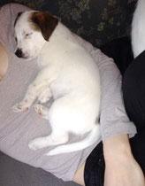 Eddi schläft, 7 Wochen alt
