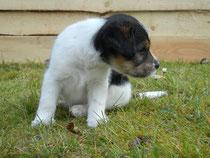 Elvis, 6 Wochen alt