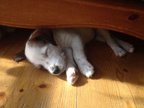 Eddi findet es unter dem Sofa richtig nett...