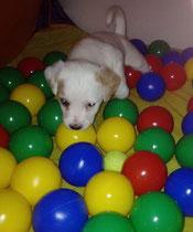 Enzo, 5 Wochen alt