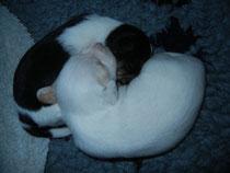 Enzo kuschelt mit Brüderchen Elvis, 2 Wochen alt