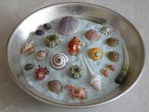 Auswahl von kleinen Schnecken und See-Igeln