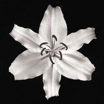 Doppel-Tetraeder  (Lilie)
