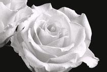 Zweisamkeit  (Rosen)