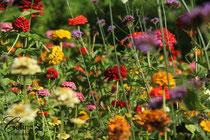 Vielfalt der Blumen