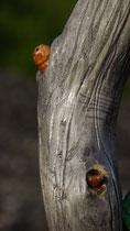 Wanderstab Unikat Holz