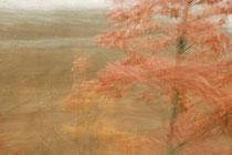 """""""Tanzender Baum"""" (Der Weg ist das Ziel #5)"""
