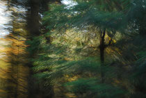 """Hohenpeißenberger Herbstwald #13"""