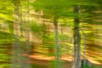 """""""Lichter Wald"""" (Der Weg ist das Ziel #14)"""