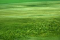 """""""Sanftes Feld"""", 2013 (aus der Serie """"Railjet"""")"""