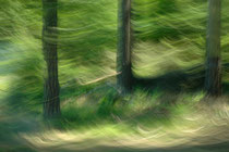 """""""Waldwellen"""" (Der Weg ist das Ziel #26)"""