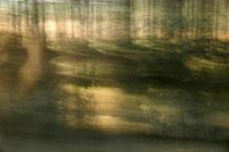 """""""Nebelwald"""" (Der Weg ist das Ziel #8)"""