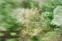 """""""Lothlorien #1"""", 2013 (from """"Railjet"""")"""