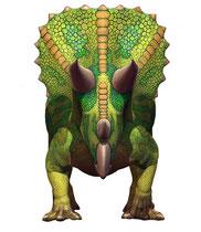 トリケラトプス フロント画像