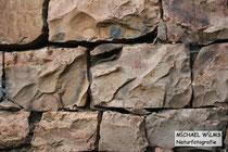 Kletternde Würfelnatter (Natrix tesselata) in einer Natursteinmauer.
