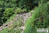 Habitat der Aspisviper (Vipera aspis) im Südschwarzwald, typische Blockhalde