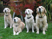Luna, Elly, Jule und Jack