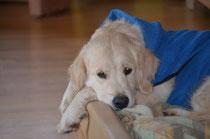 Lucy mit ihrem Bademantel :-)