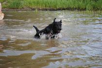 Thor de Monpaq en pratique pour le rapport dans l'eau