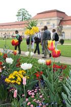 Frühlingbepflanzung vor der Großen Orangerie Schloss Charlottenburg. Foto: Helga Karl