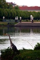 Ein Reiher steht am Ufer des Karpfenteichs im Schlosspark Charlottenburg. Foto: Helga Karl