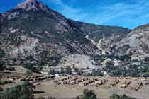 Vue du camp vers le Sidi Achour en novembre 1960. Au second plan, dans les oliviers, au-dessus des gourbis,  la mechta d'Aïn Zida