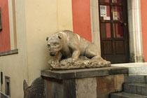L'ours ou ... le Prince ?