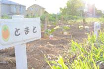 トマトやピーマン、なすなど植えました。