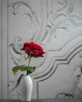 Red Rose II