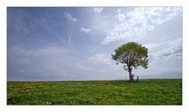 Der einzelne Baum