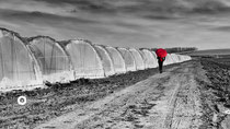 Erdbeere-Folien-Tunnels