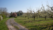 Blick auf die Burg Ittendof