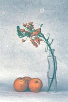 Ornithogalum dubium