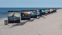 "Fotoausstellung ""Gewalt der Meere"" Zingst"