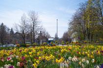 Frühlingsgruß in Überlingen
