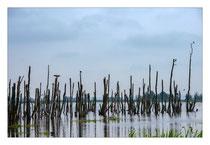 Unteres Peenetal Moor - Usedom