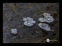 Eisstrukturen an der Salemer Aach