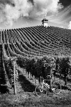 Weingut Haltenau