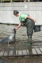 Fütterung im Robbarium