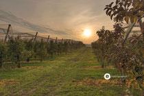 Apfelplantagen bei Ittendorf