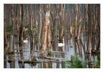 Peenetal Moor - Usedom