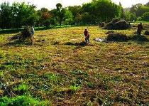 Beräumen auf den gemähten Templiner Kanalwiesen, zum Erhalt seltener Pflanzen (z.B. Orchideen)